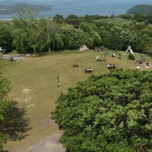 牛窓オリーブ園の展望台からのオリーブ園の緑と瀬戸内海の青が眺められます