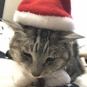 Happy Christmas from アトウラ 2019