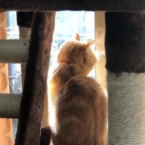 今日の猫模様 の21