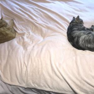 今日の猫模様 其の23