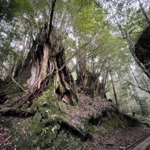 縄文杉(荒川登山口往復) -2020-12-20