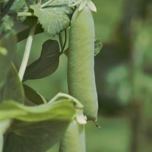 野菜畑から・・・3