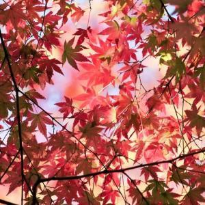 秋色の風景 2