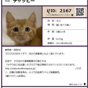 明日の「ペット博」参加猫紹介