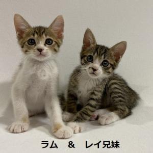 里親会参加猫紹介その①+380g子猫保護