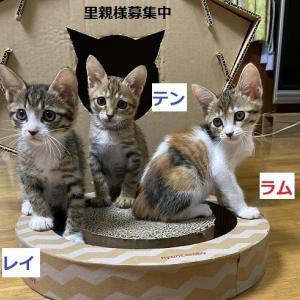 ラン元気回復+素敵な猫ハウス