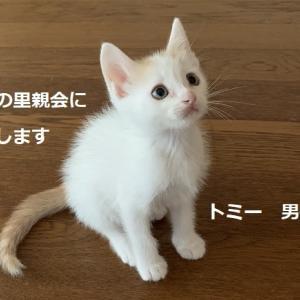 明日の里親会参加猫ポスターです。