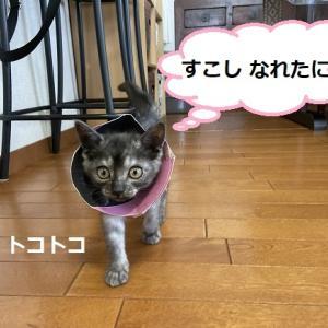 おめでとうハルちゃん&モンチちゃん+猫ベットお礼