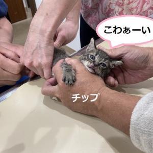 動物愛護推進員研修 動物検疫所