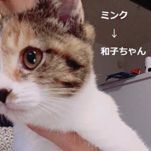 おめでとう和子ちゃんニケちゃん麦ちゃん虎徹君+Yahooニュース見て~