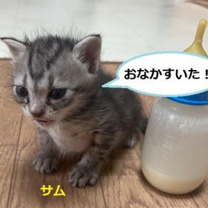 2/15(土曜)熱田イオン里親会報告
