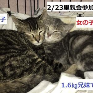 2/17(月曜)イオン熱田里親会報告