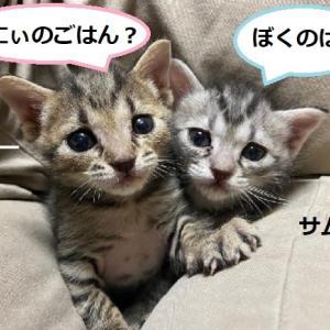 猫ご飯のご寄付お礼申し上げます