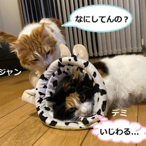 猫の術後服作成