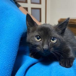 黒色子猫630g保護しました