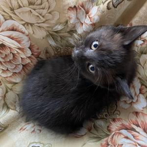人間界2日目 黒色子猫の通院