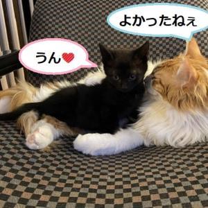 人間界3日目 黒色子猫のお見合い。