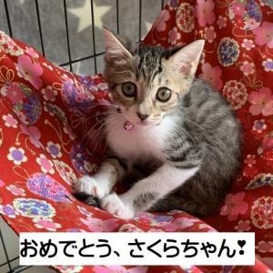 おめでとう さくらちゃん&むぎちゃん&れいちゃん (工場横3姉妹)