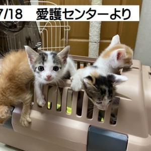 6/8生 310g~ 4匹子猫がやってきた