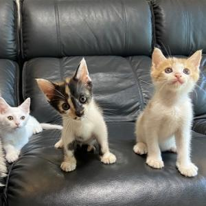merryのお見合い+猫ご飯ご寄付の御礼