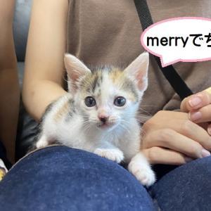 連休1日目merryのお見合い