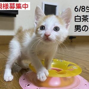 連休3日目6/8生3子猫のお見合(チャトラ 白キジ 三毛)