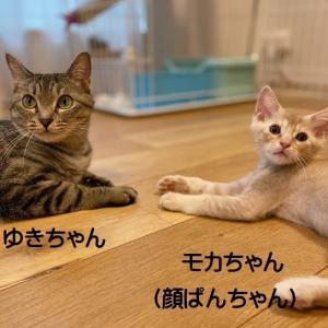 おめでとうモカちゃん ウユちゃん(顔ぱん・白女子姉妹)