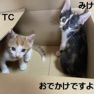 TC、みけこ&ふるちゃんトライアル開始