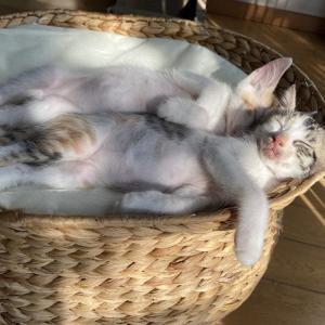 ピュリナ保護猫カレンダーの撮影+猫ご飯御礼