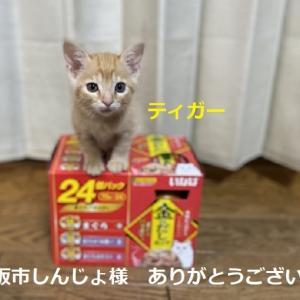 猫ご飯御礼+猫用品御礼
