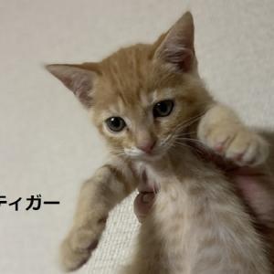 みんなで体重測定+保護猫ムギちゃん懐いてます