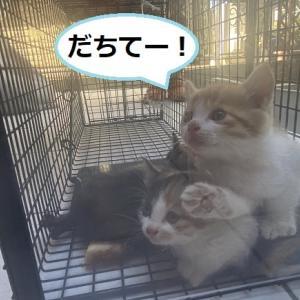 4匹子猫(450g~500g)保護