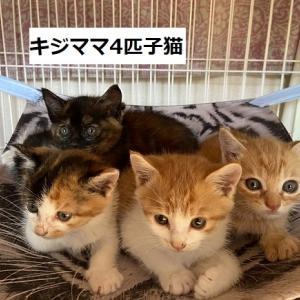 4匹子猫(450g~500g)仮名つきました