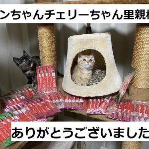 猫ご飯御礼+預かり猫さん帰還