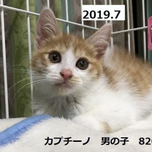 FIP治療 コタ君闘病生活記録①