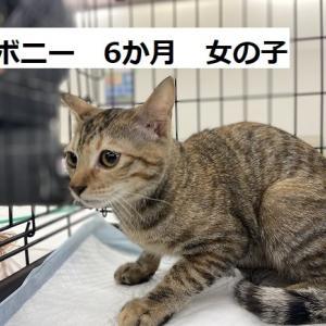 1/23(土曜)里親会参加猫紹介