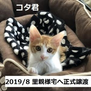 FIP治療 コタ君闘病生活記録②