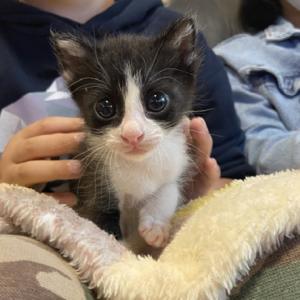 愛護センター黒猫ハチワレ3兄妹のお見合い