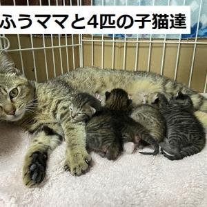 ふうママ子猫元気です+猫ご飯、用品御礼