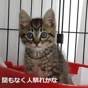 Rさん子猫保護+1歳おめでとう
