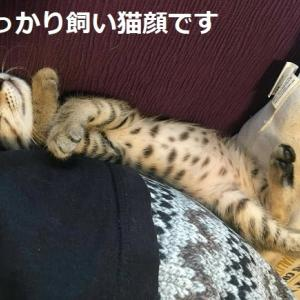 おめでとうピザちゃん+新保護猫4匹紹介