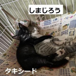 暑いですね+猫ご飯御礼