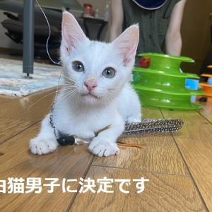 白猫男子②のお見合い