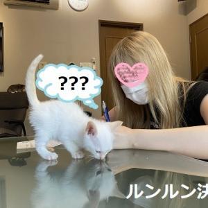 子猫のお見合い ルンルン決定