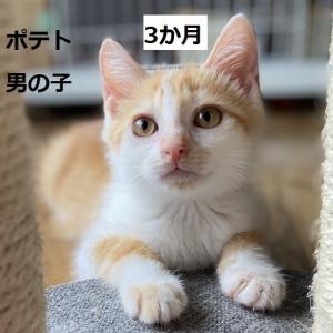 明日の里親会参加猫紹介