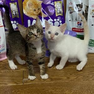猫ご飯&猫用品御礼