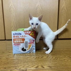 猫ご飯&猫用品御礼①