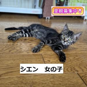 8/1(日曜)里親会参加猫紹介