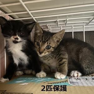 2匹子猫がやって来た