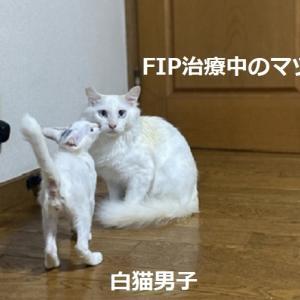 猫ミルク、猫砂御礼+マツの近況